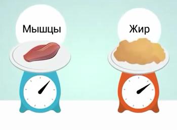 sootnoshenie-myshc-i-zhira