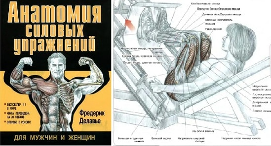 Анатомия силовых упражнений. Фредерик Делавье